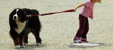 Kurztrip mit Hund nach Friedrichskoog